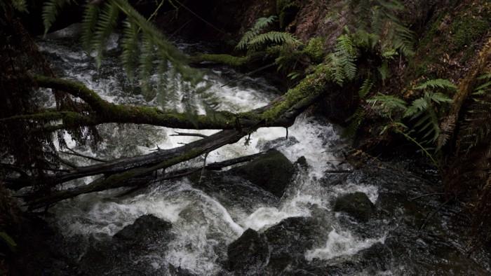 Junee River