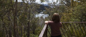 Gentle Annie Falls lookout