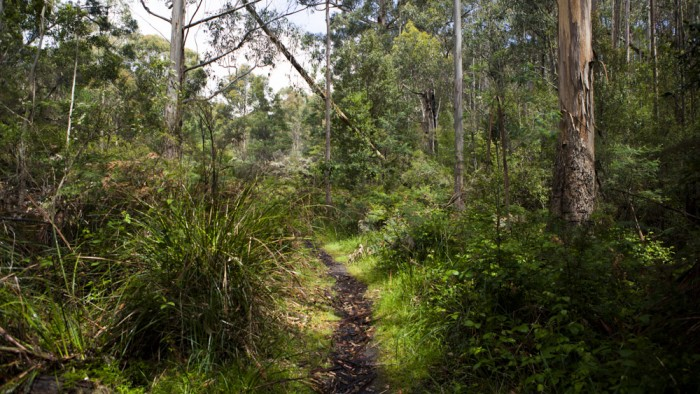 Nierinna Creek Track