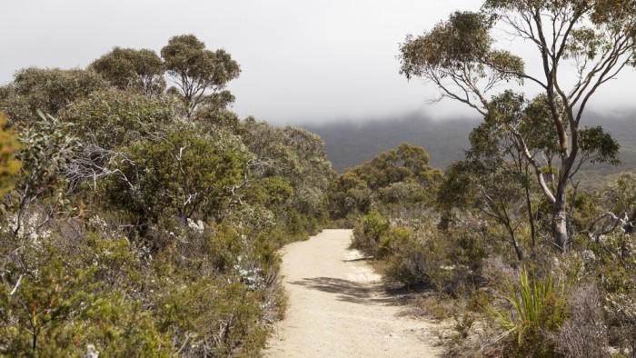 Waterfall Bay Track