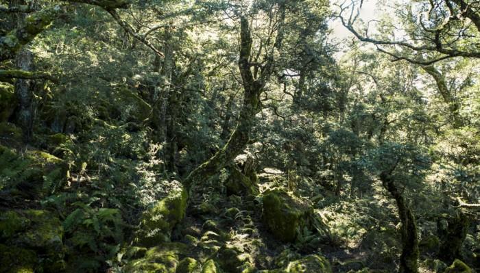 Spectacular Myrtle forest