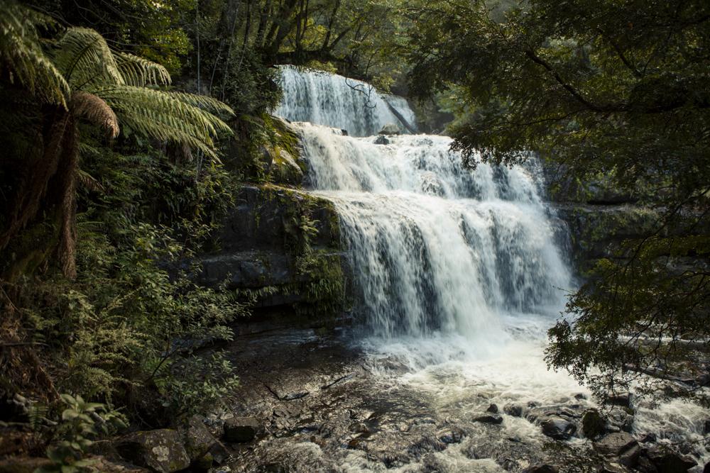 Platypus Walk >> TasTrails - Liffey Falls