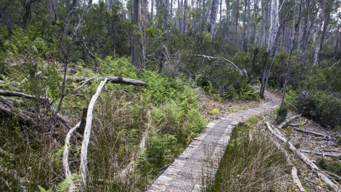 Platypus Bay trail