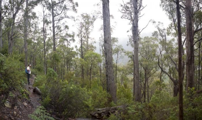 Pelverata Falls Track