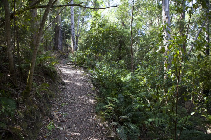 The Cascade Walking Track