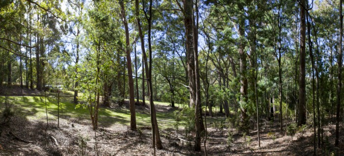 Upper section of the Cascade Walking Track