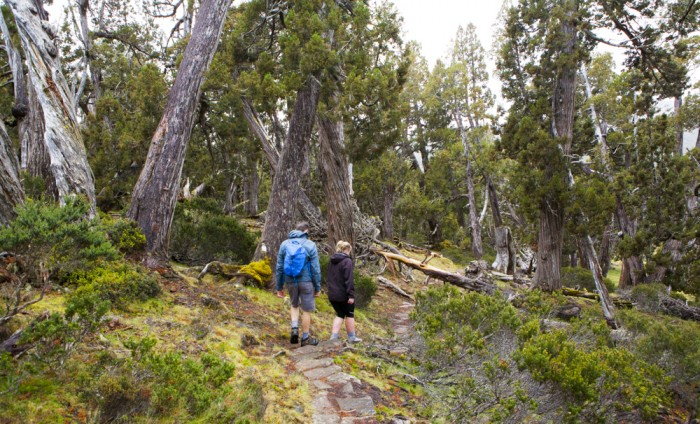 how to get to liffey falls