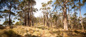 Tinderbox Hills Track