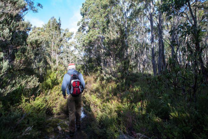 Track towards Mount Montagu