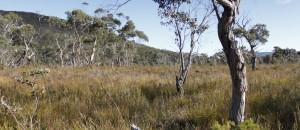 Arthurs Peak, overgrown trail