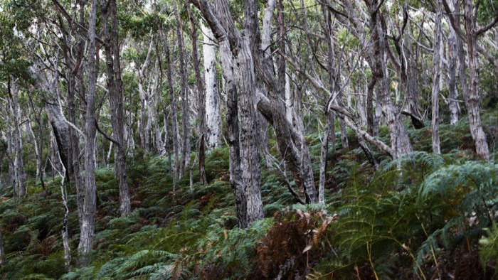 Bruny Island Forests