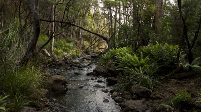 Bivouac Creek