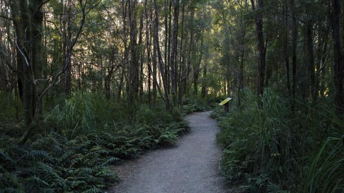 Nelson Falls Trail