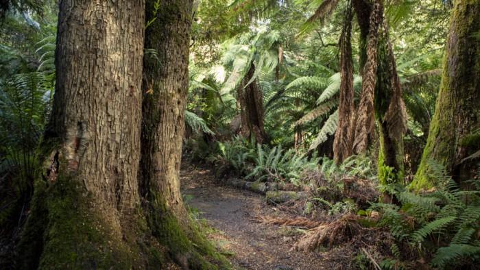 Liffey Falls Trail