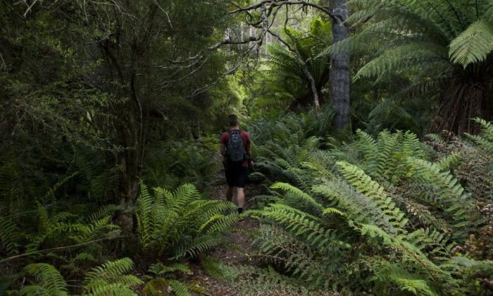 Bivouac Bay Trail