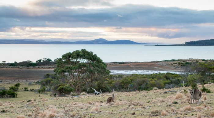 Point Lesueur Wetlands